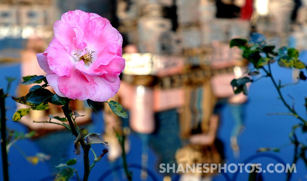 Flower in front of Sleeping Beauty's Castle at Disneyland