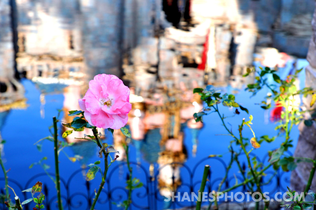 Flower in front of Sleeping Beauty's Castle at Disneyland